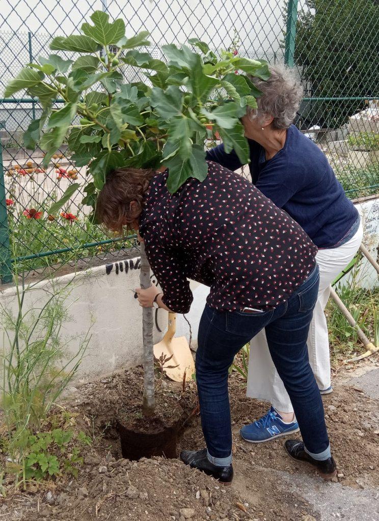 Quand planter un arbre devient un acte citoyen !